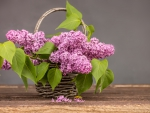 Purple Lilac In Basket
