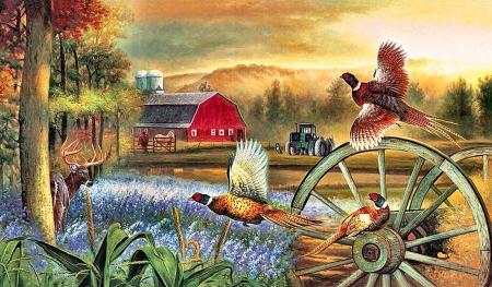 Pheasant Flight F2 Birds Animals Background Wallpapers