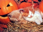 cute sleeping Halloween kittens