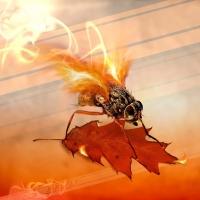 firefly autumn