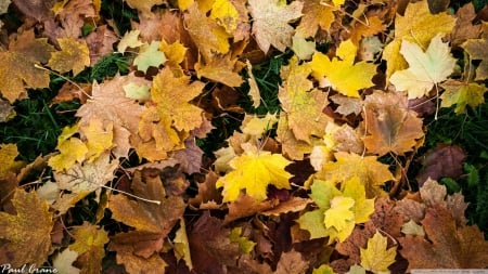 Autumn leaves - fall, autumn, colourful, grass, HD, seasons, leaf, leaves, wallpaper, nature, colours