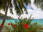 Red Hibiscus on Tahitian Beach