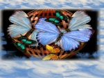 basket of butterfly