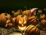 Fox In The Pumpkin Patch