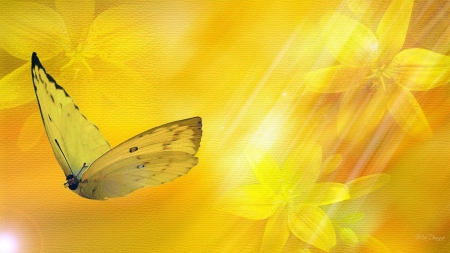 Wings in the sunlight - gold, butterfly, flight, yellow, sunny
