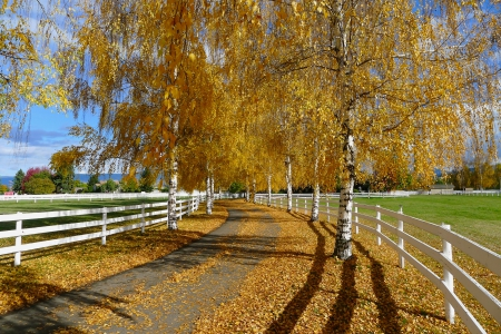 Autumn Scene - leaves, trees, Autumn, fences