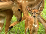 Mama Deer and Small
