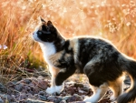 Calico Kitty in Wheat Field F