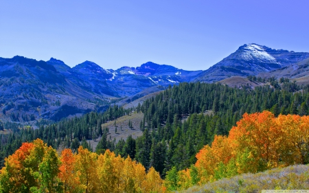 Fall Colors in the Sierra Mountains - autumn, mountains, sierra, forests, trees