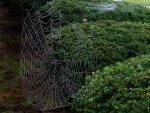 Natural Halloween Web