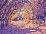 Purple Winter Sunset