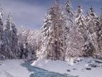 Frozen River in Winter Forest