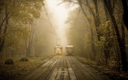 Trams meeting - forest, autumn, trams, park, trees, fog, train, two, misty