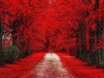 * Red autumn alley *