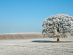 Snow-Covered Tree