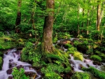 BEAUTIFUL MOSS COVERED FOREST FALLS