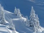 Winter Trees on Mountainside
