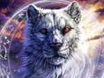White Tiger - hdr