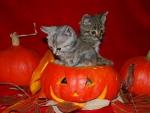 Cute Halloween Kittens