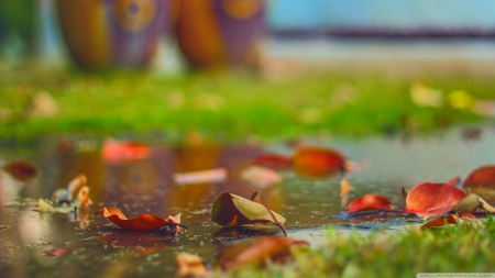 Leaves - leaf, HD, water, fall, close-up, seasons, autumn, rain, grass, macro, photography, leaves, wallpaper, abstract