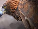 Goilden Eagle