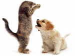 playing kitten and puppy