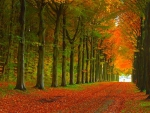 Fallen Leaves on Autumn Road