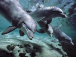 dolphin couple