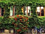Romantic Green Wall