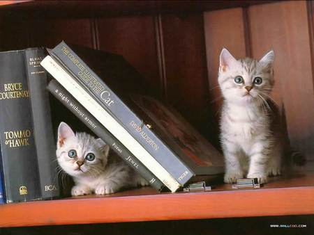 Kitty Kat Book Ends - shelving, kittens, books, cats