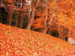 Mountain of Golden Leaves