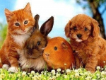 cute company