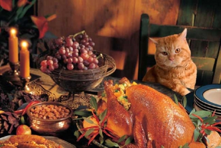 Thanksgiving Cat Cats Animals Background Wallpapers On Desktop