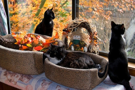 Thanksgiving Window Decoration Cats Animals Background