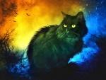 Mysterious Black Cat