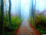 A Fall Adventure