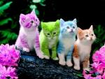 COLORED KITTIES