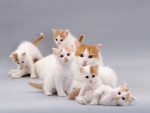 cute cat and kittens