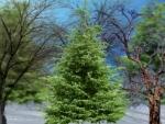 ~*~ Winter Trees ~*~