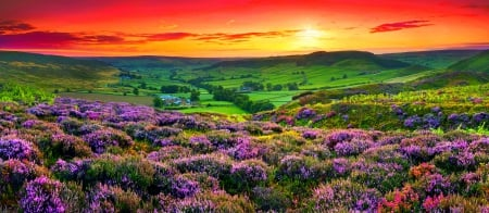 Wildflowers Sunset - hills, red, orange, yellow, beautiful, sunset, sky, meadows, England, green, pastures, flowers, pink, field