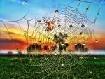 Spider - spider web