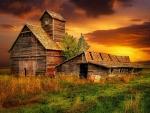 Grain And Pig Barns