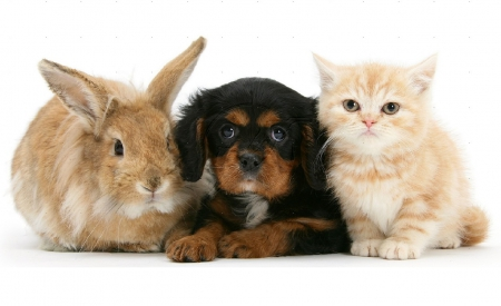 kitty, puppy and bunny - Cats & Animals Background ...
