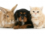 kitty, puppy and bunny