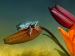 LITTLE FROG ON FLOWER