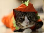 halloween funny cat
