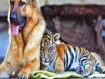 Dog and tiger friendship