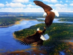Sky Dancers - Bald Eagle