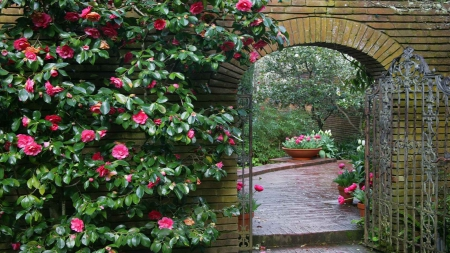 Archway and Pink Roses - archway, photography, abstract, pink roses