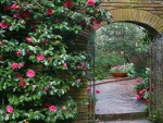 Archway and Pink Roses
